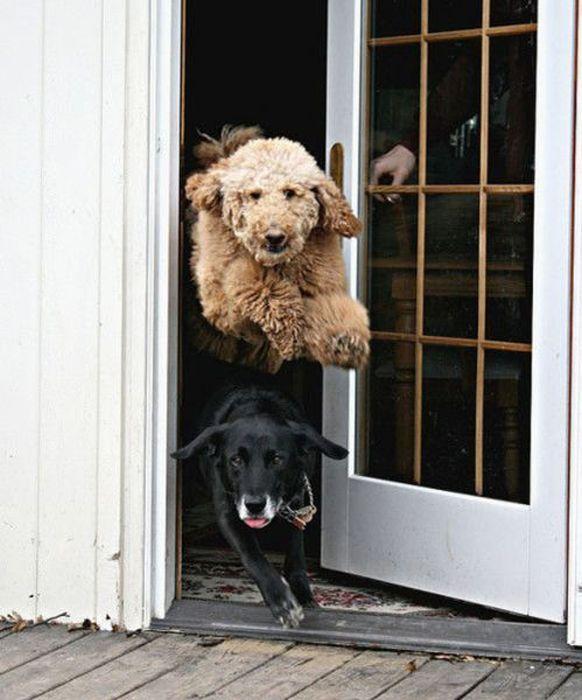 www.ebhamlinks.com | شکار لحظات ناب،دیدنی و خنده دار