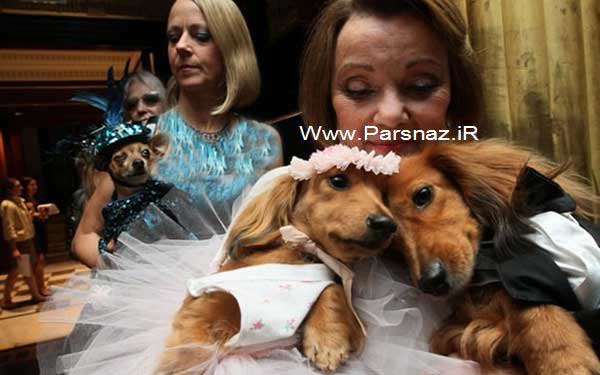 www.parsnaz.ir - عروسی جالبی که در کتاب گینس ثبت شد + تصاویر