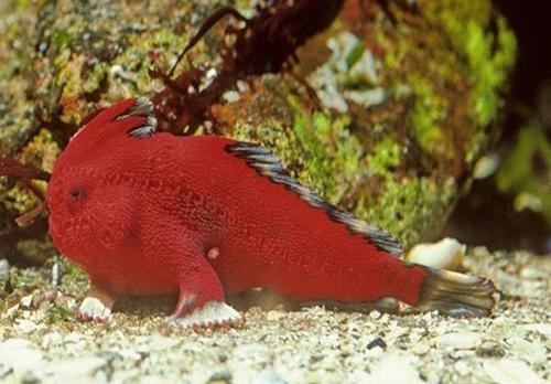 ماهی هایی که راه می روند