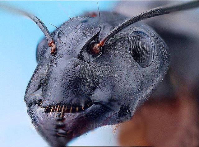 مورچه از نمای خیلی نزدیک
