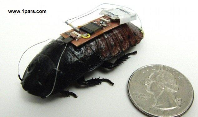 Beetle.1