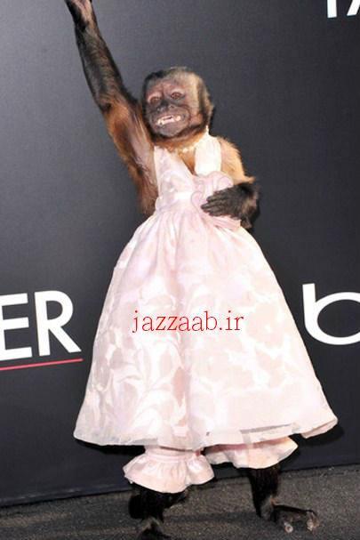 عجیب و متفاوتترین عروسجهان !-www.jazzaab.ir
