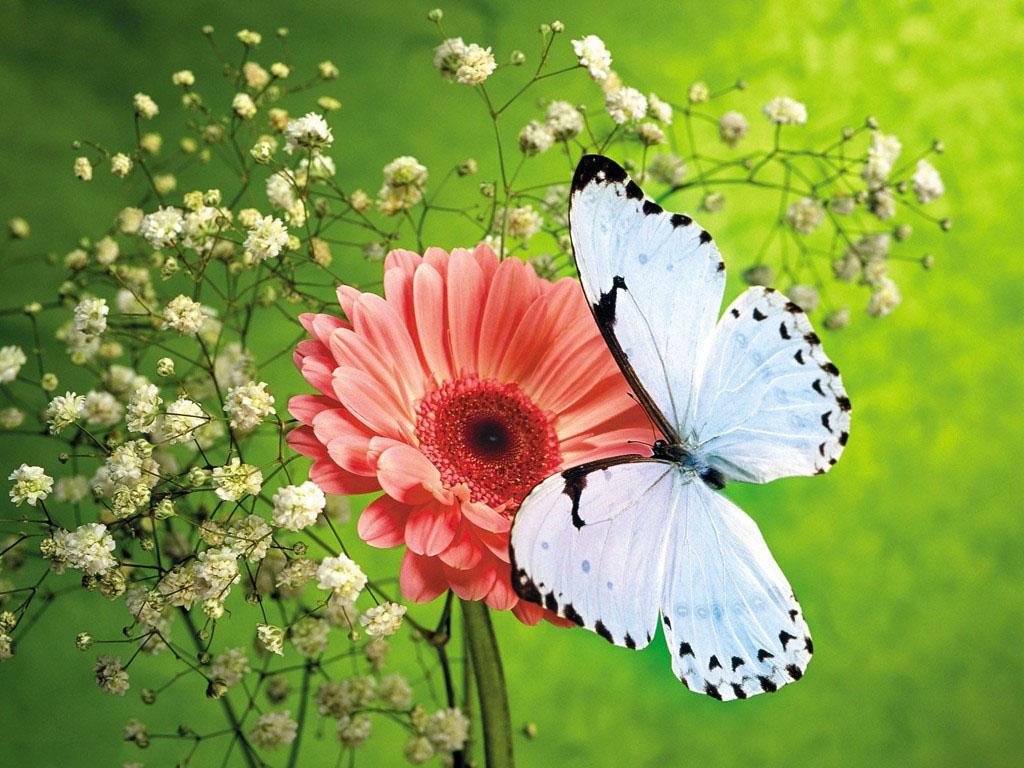 پروانه های دیدنی و فوق العاده زیبا