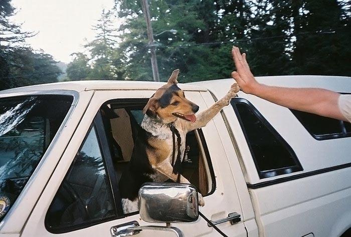 124546798543445454a  اوج وفاداری را از این سگ بیاموزید(عکس)