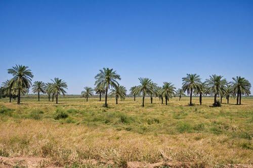 دمای خوزستان از مرز ۵۰ درجه هم می گذرد