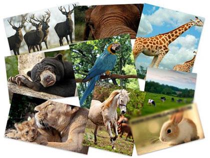 مجموعه ۵٠ والپیپر زیبا و با کیفیت از حیوانات