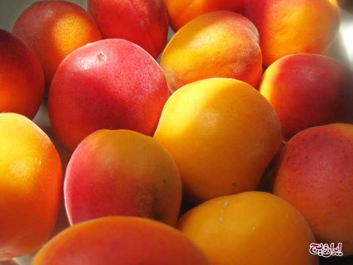 ۷ میوه مقوی و خوشمزه تابستان