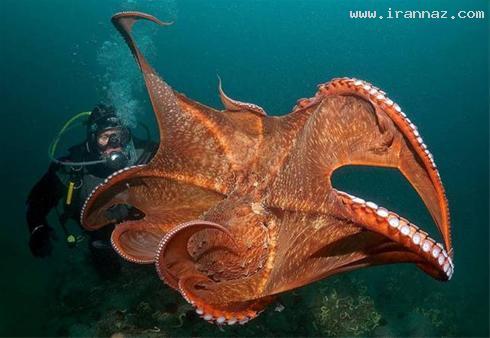 عکس های هنرنمایی خداوند در آفرینش دنیای زیر آب ، www.irannaz.com