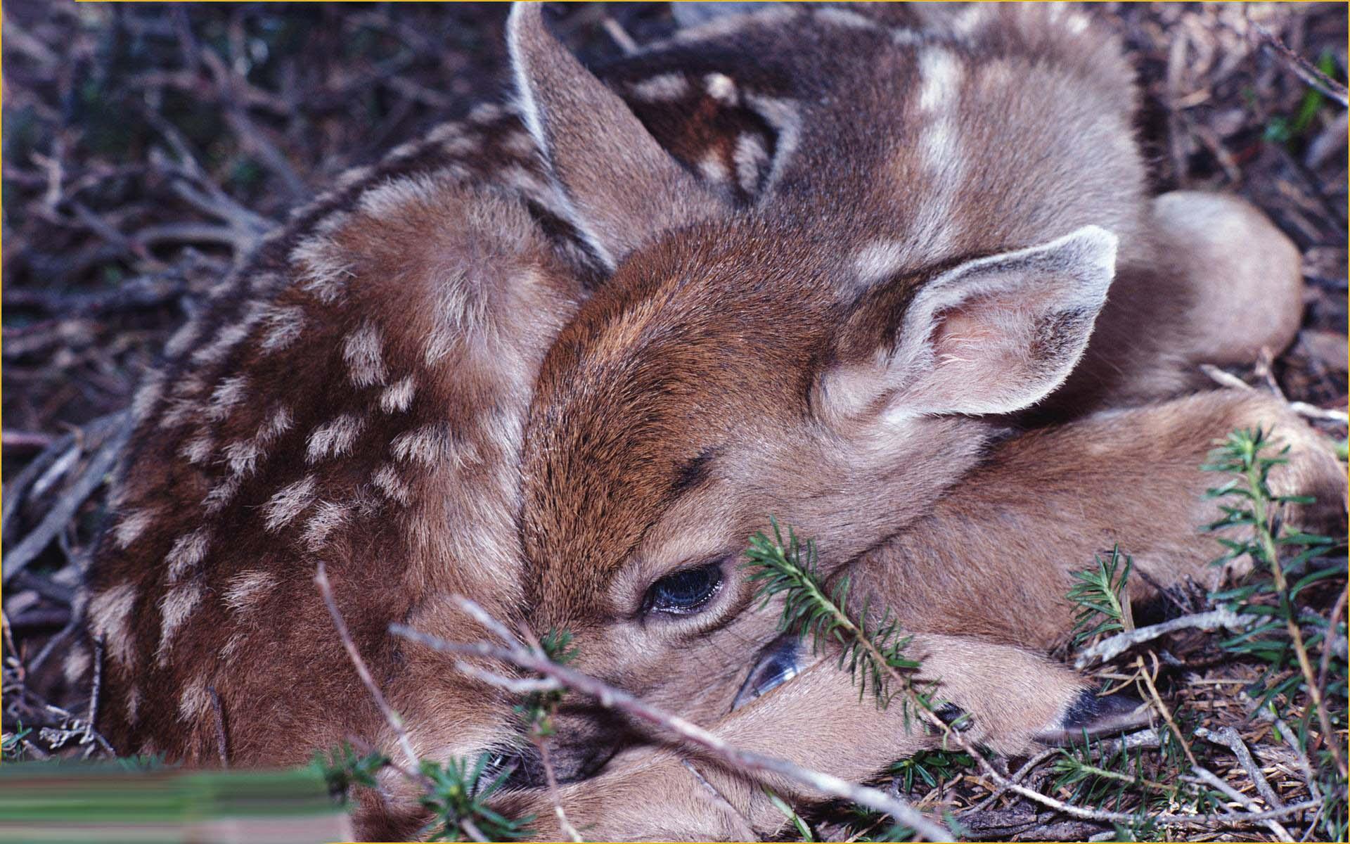 تصاویر پس زمینه زیبا از حیوانات