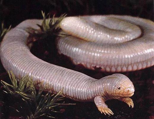 عکس هایی از ترسناک ترین و وحشتناک ترین موجودات دنیا