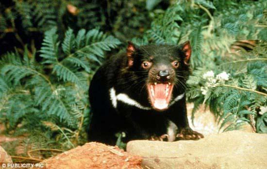 زشت تر از این حیوانات تا حالا دیدین؟!