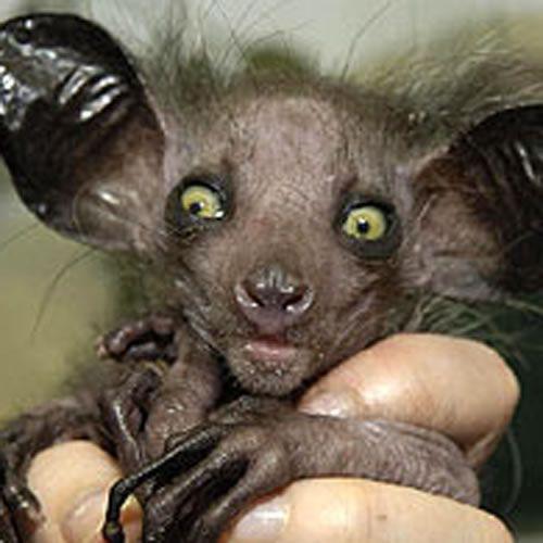 تصاویر وحشتناک ترین موجودات در طبیعت