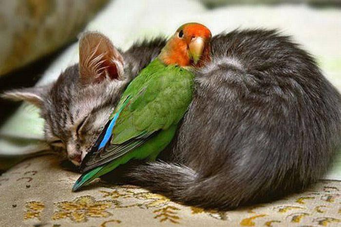 باحال ترین عکس های حیوانات