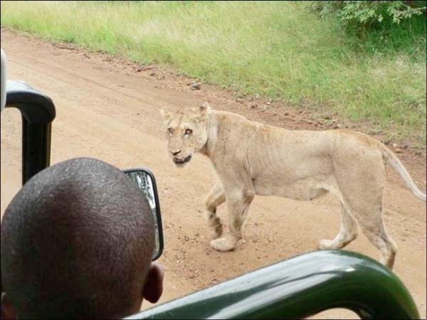 تعامل انسان و حیوانات در پارک حیات وحش آفریقا