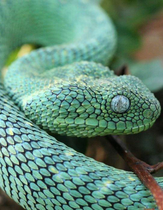 تصاویر زیبا و شگفت انگیز از حیوانات