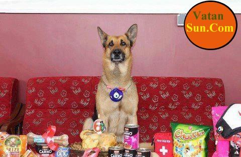 سگی که جنازه ها را از زیر آوار زلزله بیرون می آورد+عکس