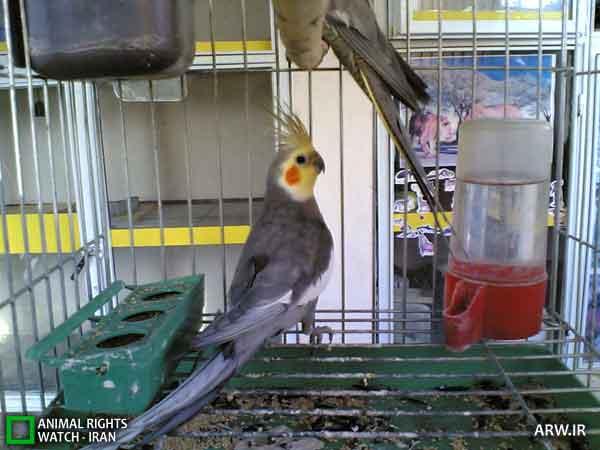 https://www.momtaznews.com/wp-content/uploads/2012/08/Animal-Rights-Watch-ARW-4589.jpg