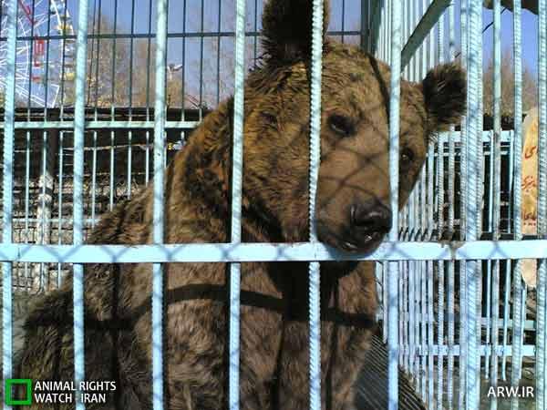 https://www.momtaznews.com/wp-content/uploads/2012/08/Animal-Rights-Watch-ARW-4591.jpg