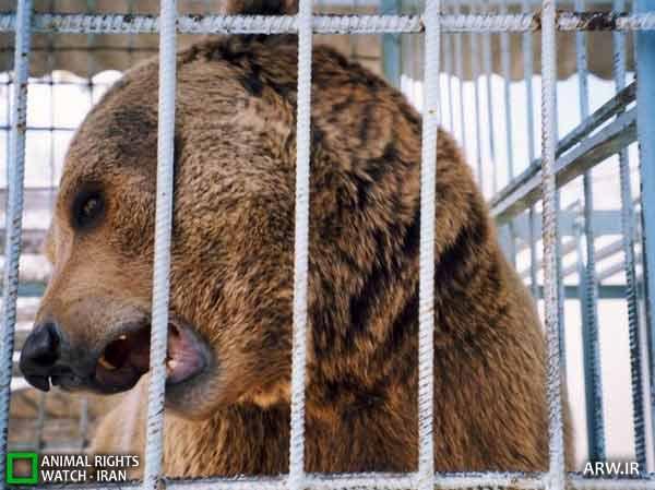 https://www.momtaznews.com/wp-content/uploads/2012/08/Animal-Rights-Watch-ARW-4592.jpg