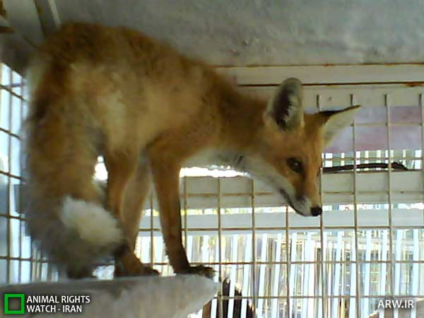 https://www.momtaznews.com/wp-content/uploads/2012/08/Animal-Rights-Watch-ARW-4593.jpg