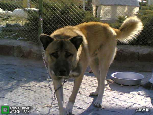 https://www.momtaznews.com/wp-content/uploads/2012/08/Animal-Rights-Watch-ARW-4595.jpg