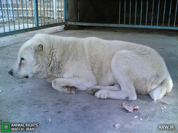 https://www.momtaznews.com/wp-content/uploads/2012/08/Animal-Rights-Watch-ARW-4596.jpg