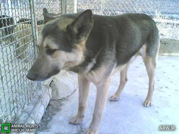 https://www.momtaznews.com/wp-content/uploads/2012/08/Animal-Rights-Watch-ARW-4597.jpg