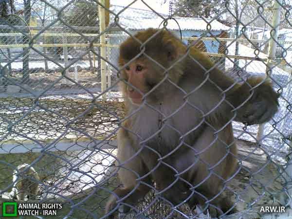 https://www.momtaznews.com/wp-content/uploads/2012/08/Animal-Rights-Watch-ARW-4598.jpg