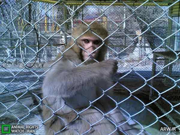 https://www.momtaznews.com/wp-content/uploads/2012/08/Animal-Rights-Watch-ARW-4600.jpg