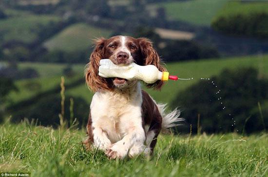تصاویری از محبت مادرانه یک سگ به بره های یتیم