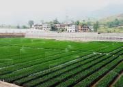 استان خوزستان رتبه نخست طرح توسعه کشاورزی کشور را کسب کرد
