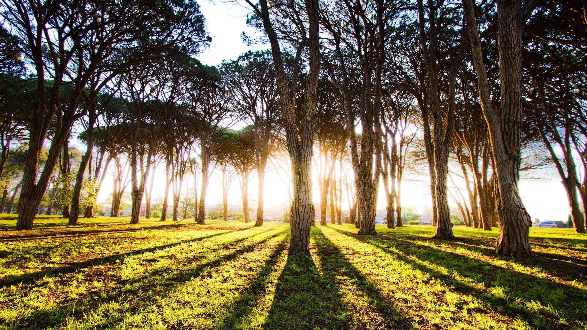 تصاویر پس زمینه های زیبا طبیعت