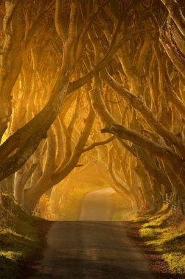 تصاویر رویایی از  جاده ای زیبا در ایرلند