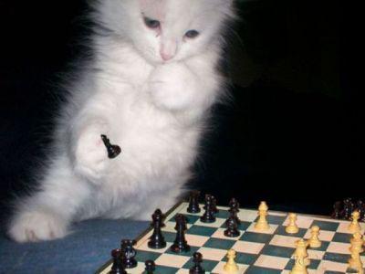تصاویر باحال و خنده دار از حیوانات درس خوان