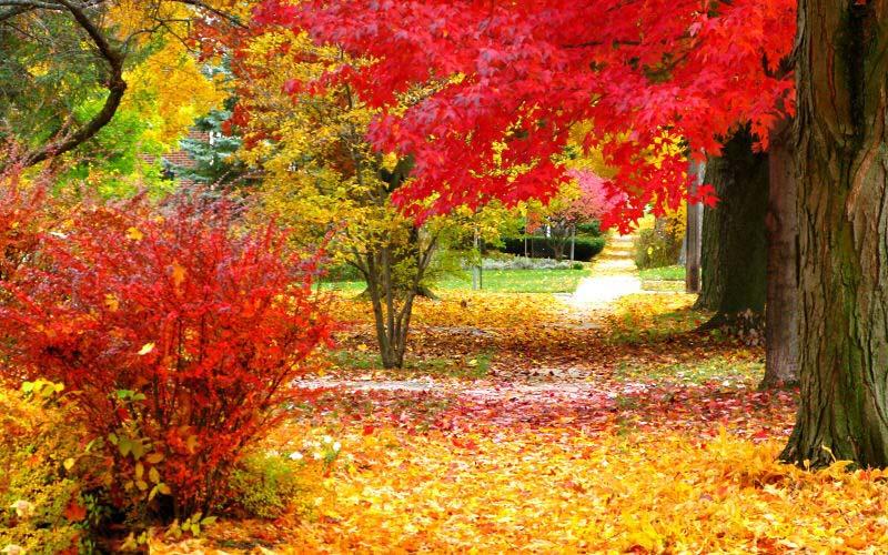 عکس های زیبا طبیعت جهان
