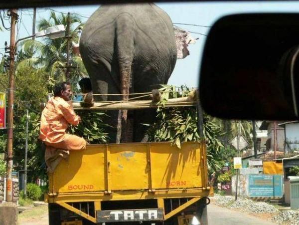 سوژه های خنده دار هندی