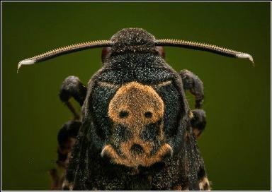 عکس های دیدنی ماکرو از حشرات