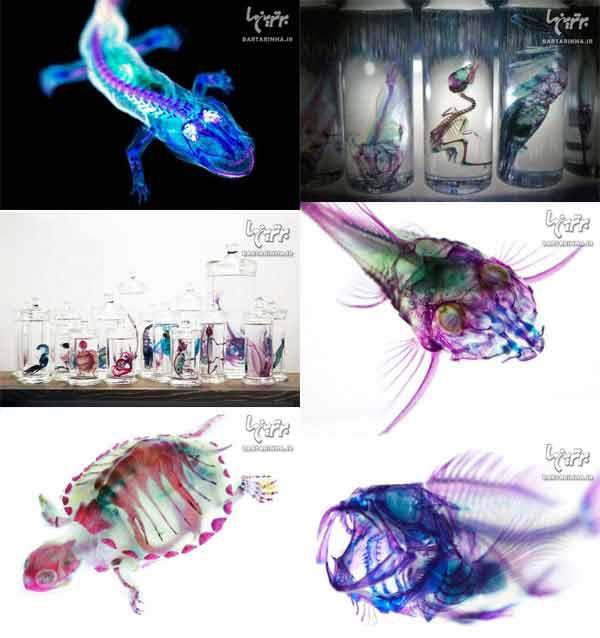 خلق آثار زیبا و دیدنی با حیوانات مُرده / عکس