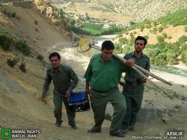 ماهیها در محاصره صیادان برقی!