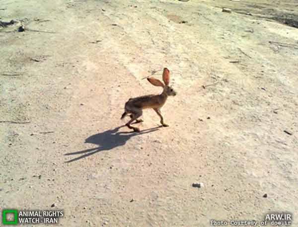 رهاسازی خرگوش