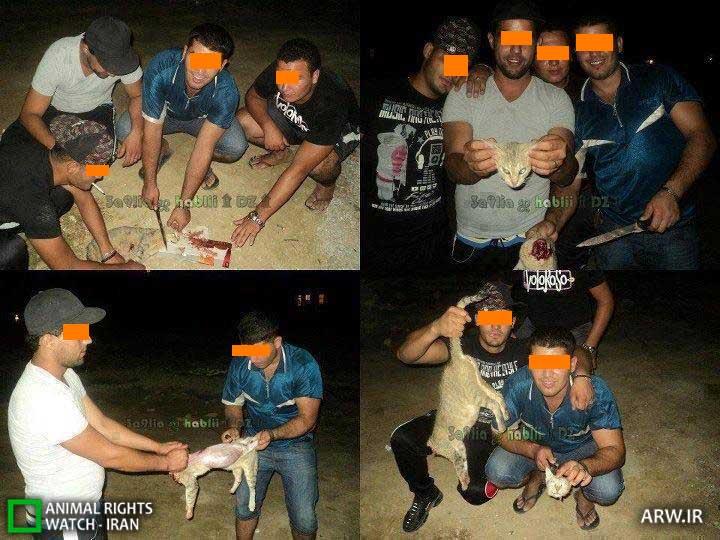 شکنجه و پوست کندن گربه در تونس