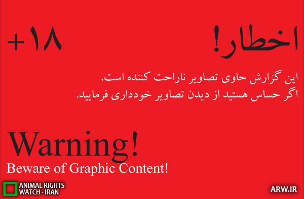 این بار ایران نیست!؛ شکنجه گران گربه تونسی هستند/ تصویر