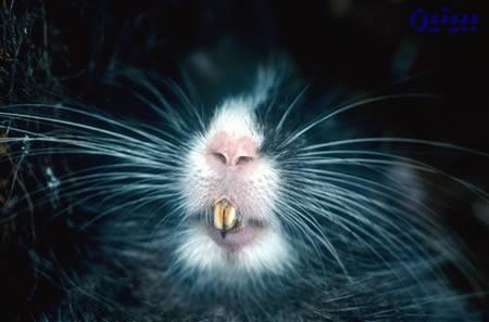 عکس حیوانات تازه کشف شده