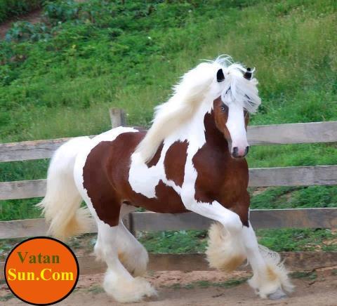 تصویری از عروس اسب ها