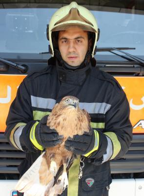 آتش نشان+پرنده شکاری