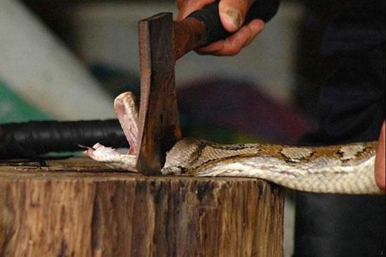 مراحل ساخت محصولات پوست مار