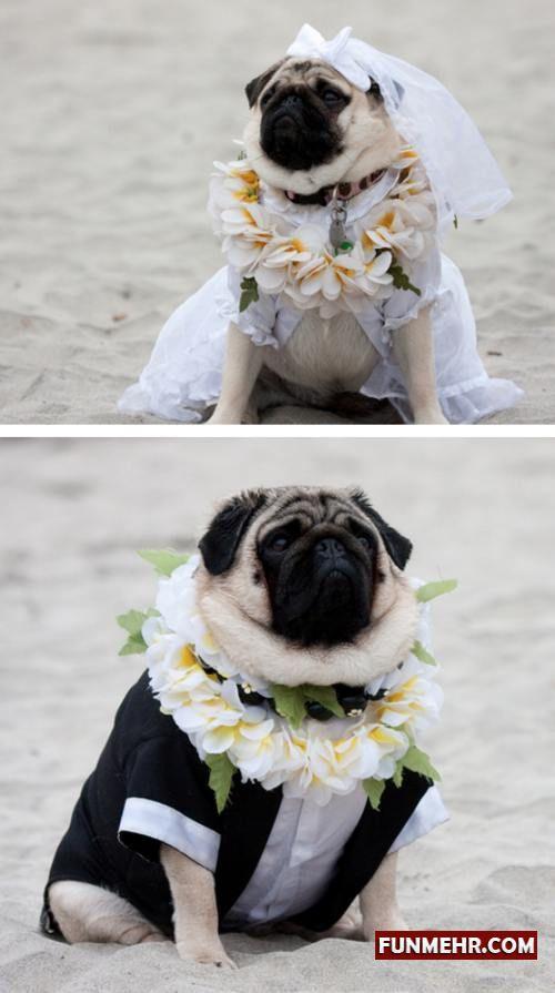 زیباترین عروس و دامادی که به عمرتان دیده اید