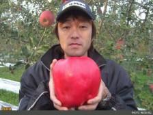 سنگینترین سیب جهان/عکس