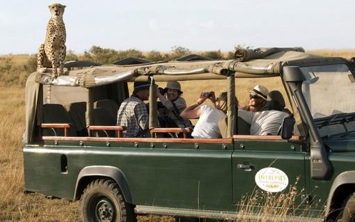 یک یوزپلنگ روی خودروی توریست های که به دیدن طبیعت وحشی شمال غرب کنیا رفته بودند.