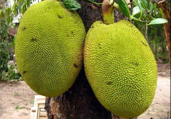 عجیبترین میوههای جهان را بشناسید +عکس